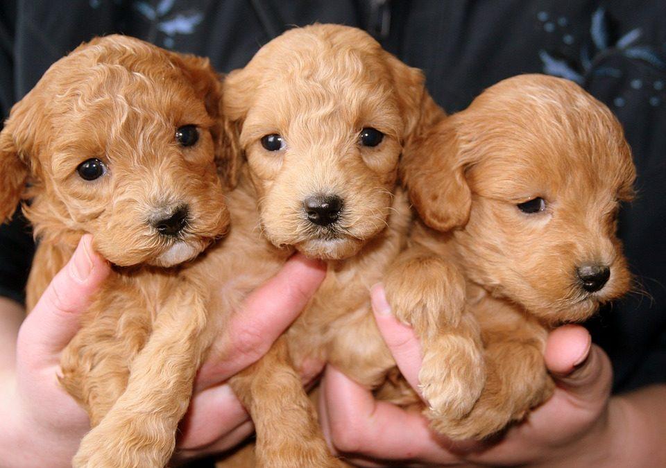 La tratta dei cuccioli