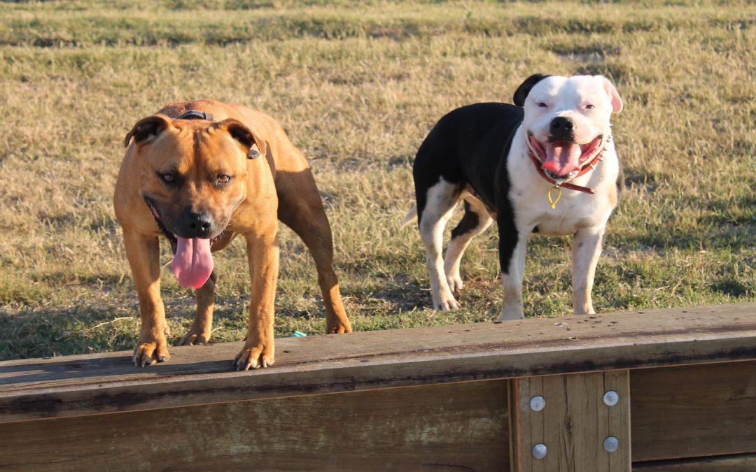 Cattivi proprietari creano cani aggressivi