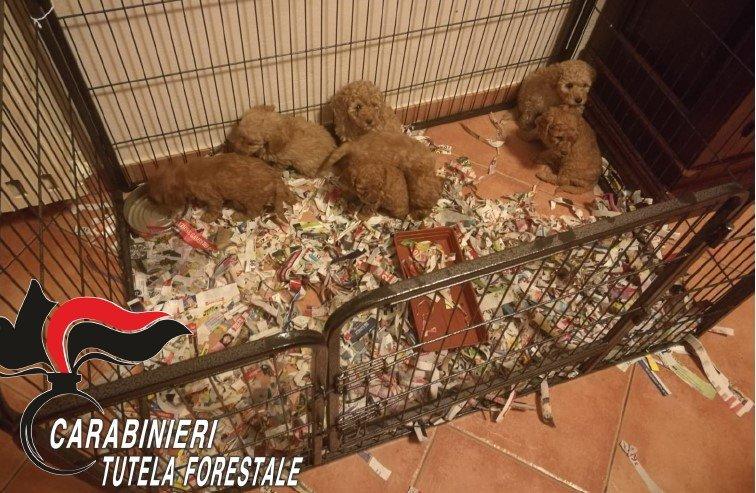 La truffa dei cuccioli sul web: i Carabinieri Forestali di Lodi ancora una volta fanno scattare le manette