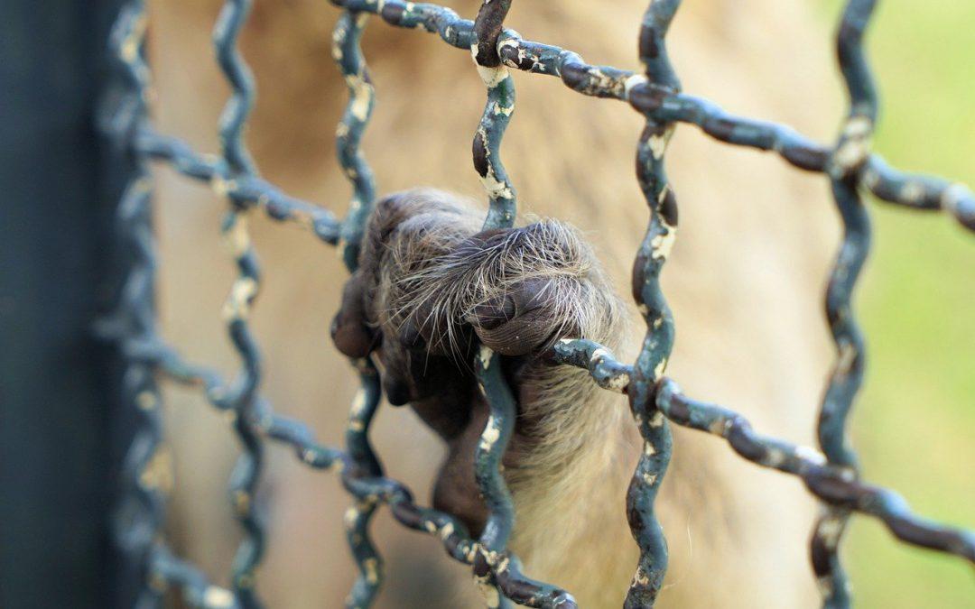 Il dovere di rispettare i diritti degli animali non dovrebbe dipendere dalla specie del prigioniero