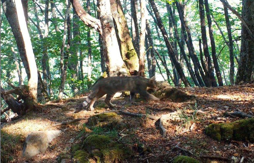 Sopravvissuti all'Homo sapiens – Una storia di resistenza selvatica è il nuovo progetto di Paolo Rossi