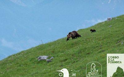 Orso e formica: il nuovo progetto del Parco Nazionale d'Abruzzo, Lazio e Molise dedicato all'orso marsicano