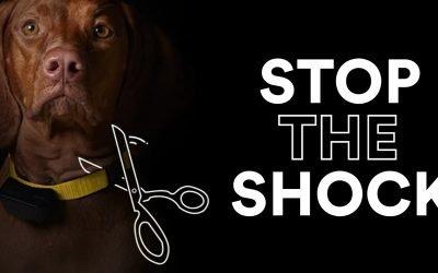 Collari elettrici e maltrattamento animali: una materia in cui la giurisprudenza non contribuisce a far chiarezza