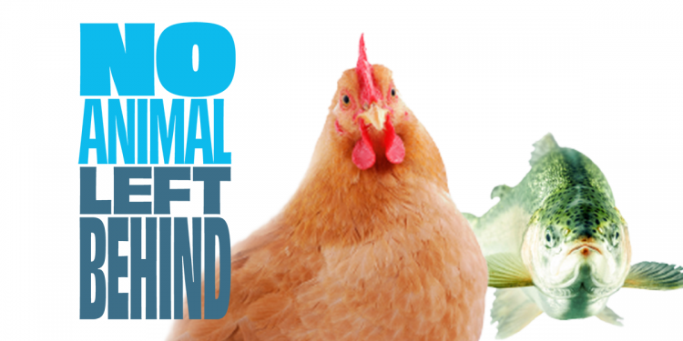 No Animal Left Behind: la richiesta di revisione della legislazione europea sulla protezione degli animali