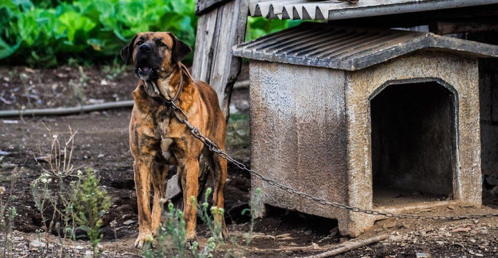Cani liberi dalle catene