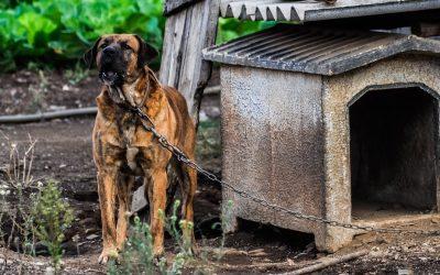 Cani liberi dalle catene: uno studio racconta la sofferenza degli animali costretti a stare sempre legati