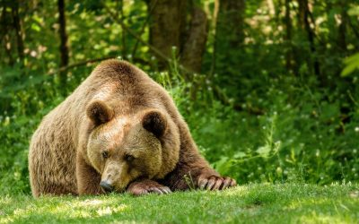 Jj4 può restare libera, mentre rimane imprigionato l'orso M57 per decisione del tribunale di Trento