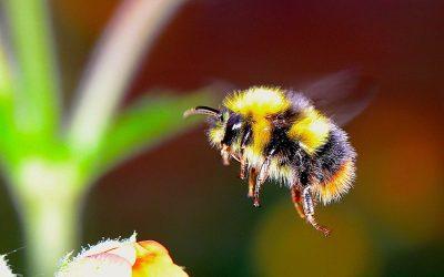 Insetti in caduta libera a causa di pesticidi e cambiamenti climatici, ma senza di loro il sistema collassa
