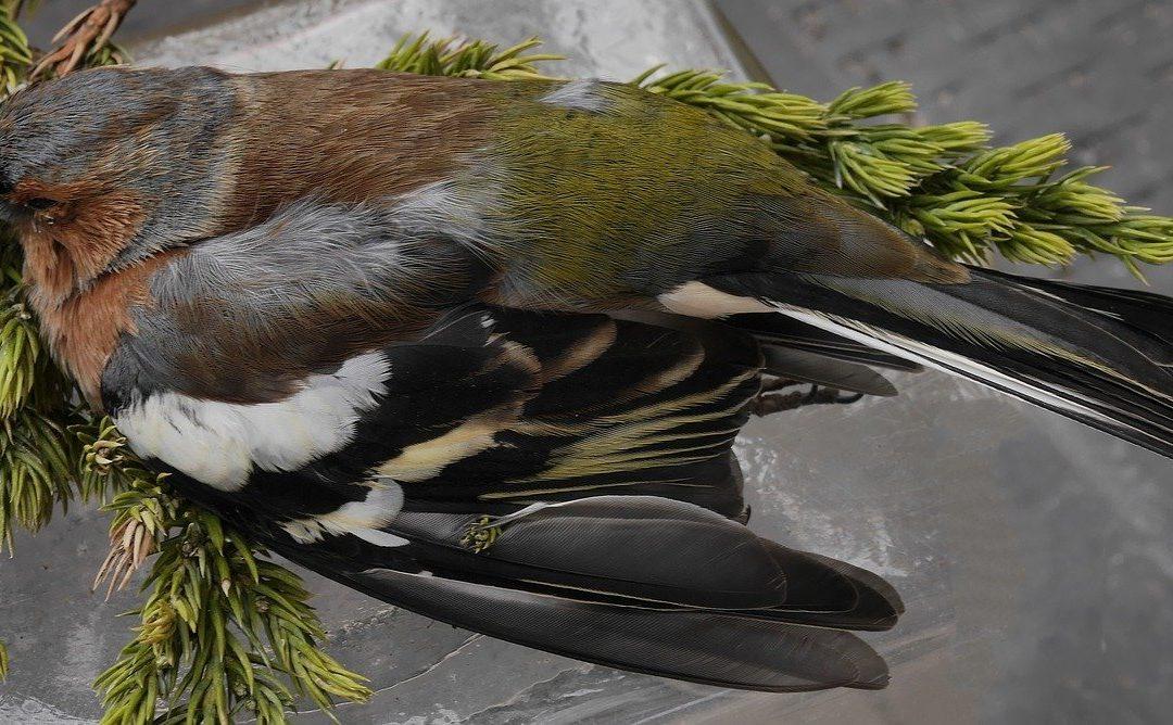 Spiedo di uccelli protetti in tempi di Covid, con annesso banchetto, nella sede della Comunità montana della Val Trompia