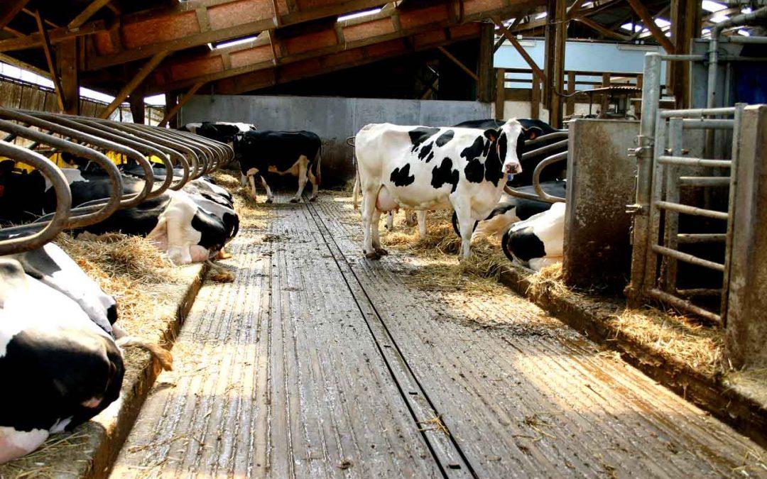 La grande bugia del benessere animale: un concetto spesso vuoto di contenuti, riempito solo di parole