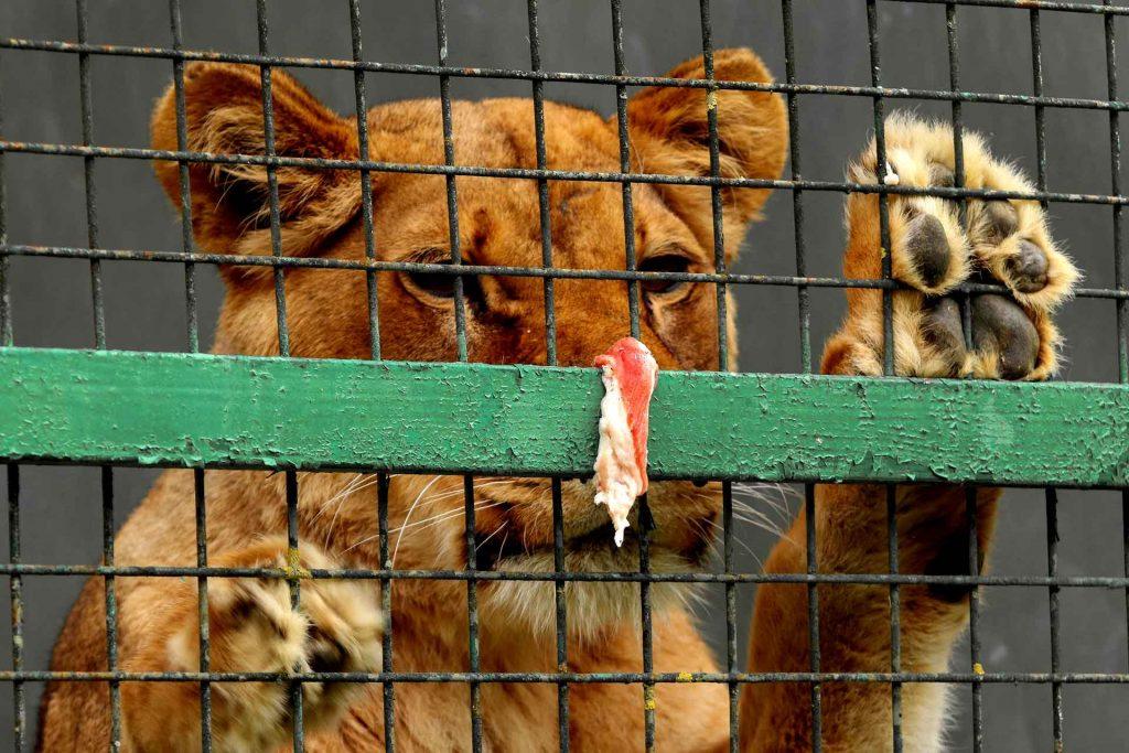 maltrattamento animali processo penale