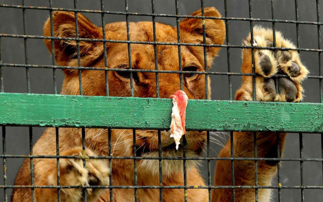 Maltrattamento animali e processo penale, la modifica potrebbe falcidiare i processi