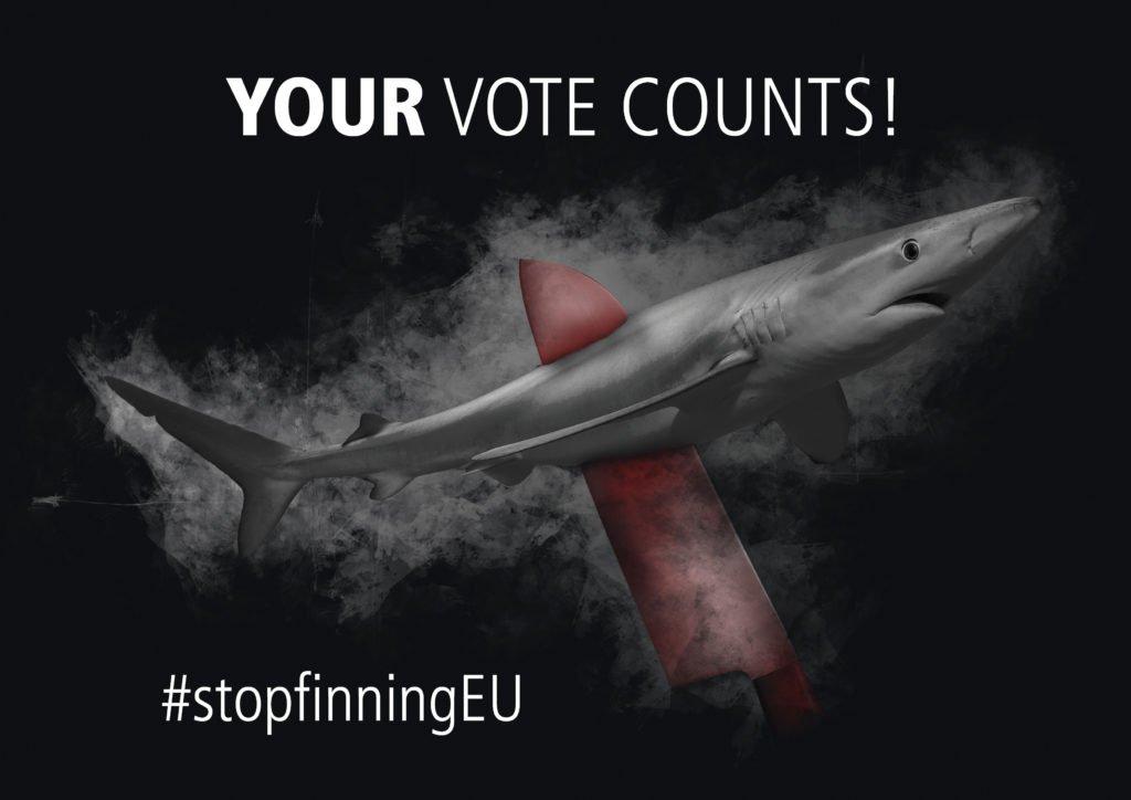 stop finning salva squali