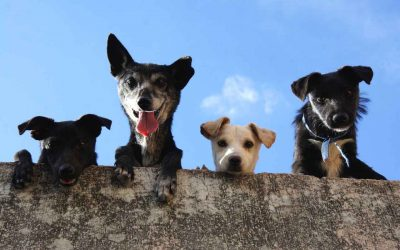 Vogliamo un assessorato per Animali e Ambiente in ogni città italiana