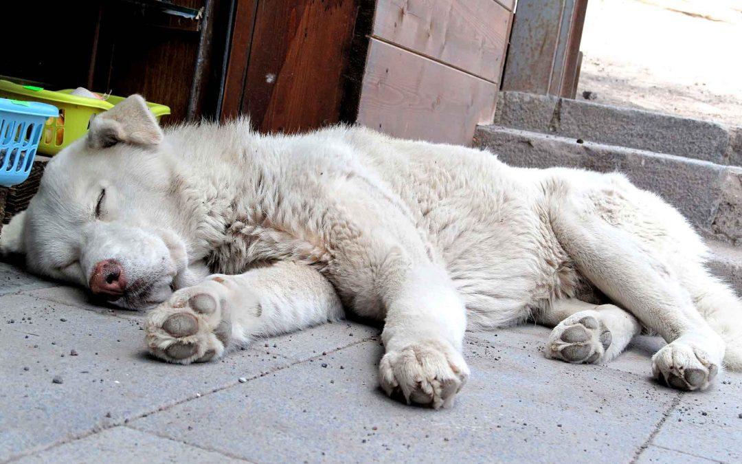 Vendetta contro i randagi in Calabria: avvelenati una ventina di cani