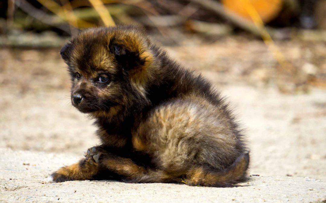 Traffici di cani dai canili italiani verso altri paesi europei: una storia che non convince